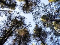 Basecamp Trees