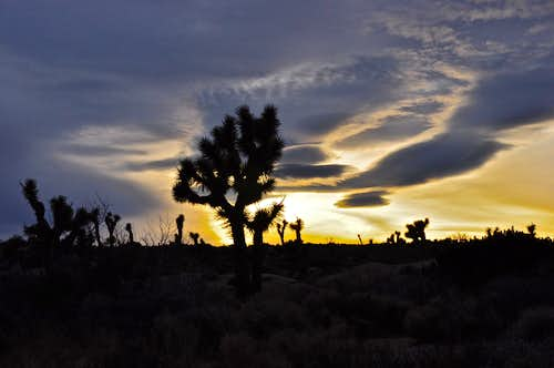 Night falls on Joshua Tree