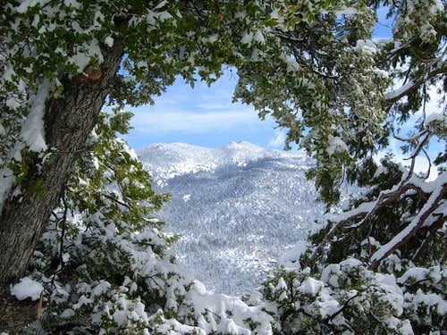Skiing on Black Mountain Road