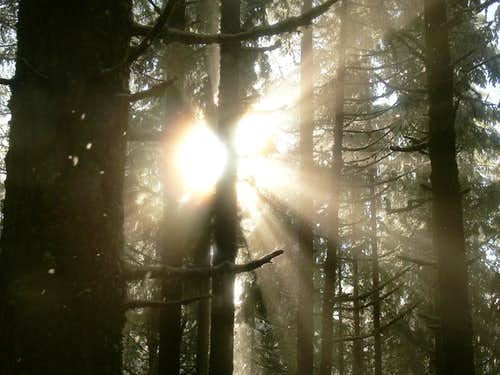Sun Beams in the Woods