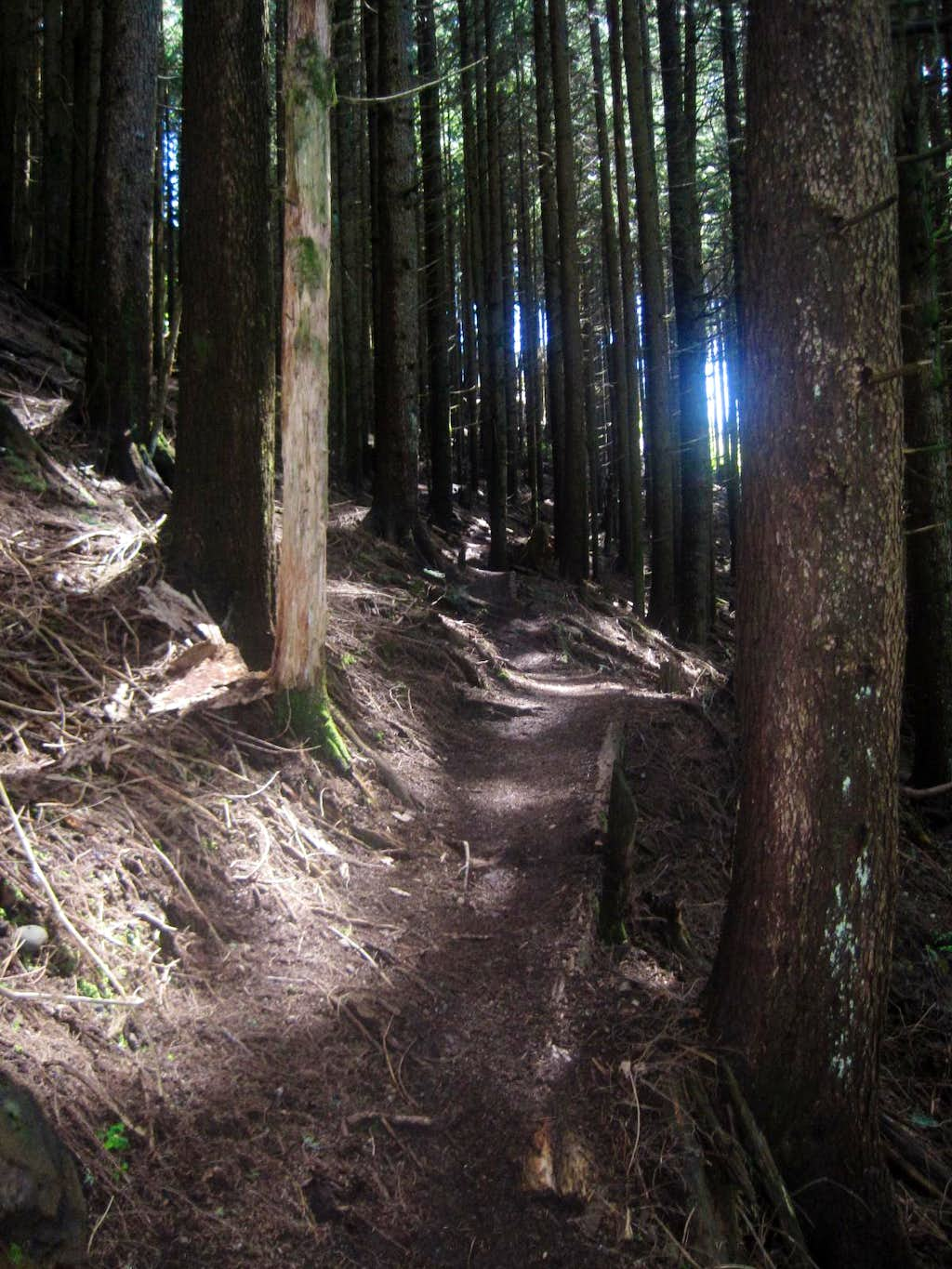 Pathway to the Top