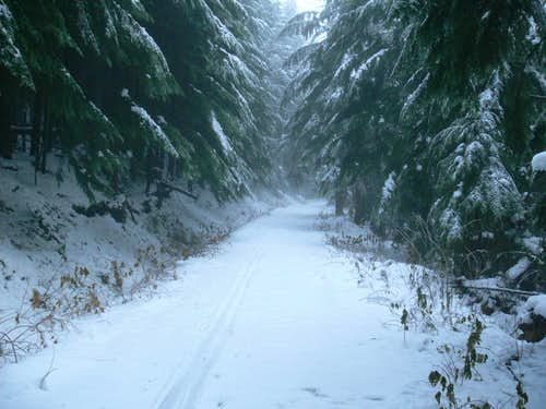 Snow Road up East Tiger