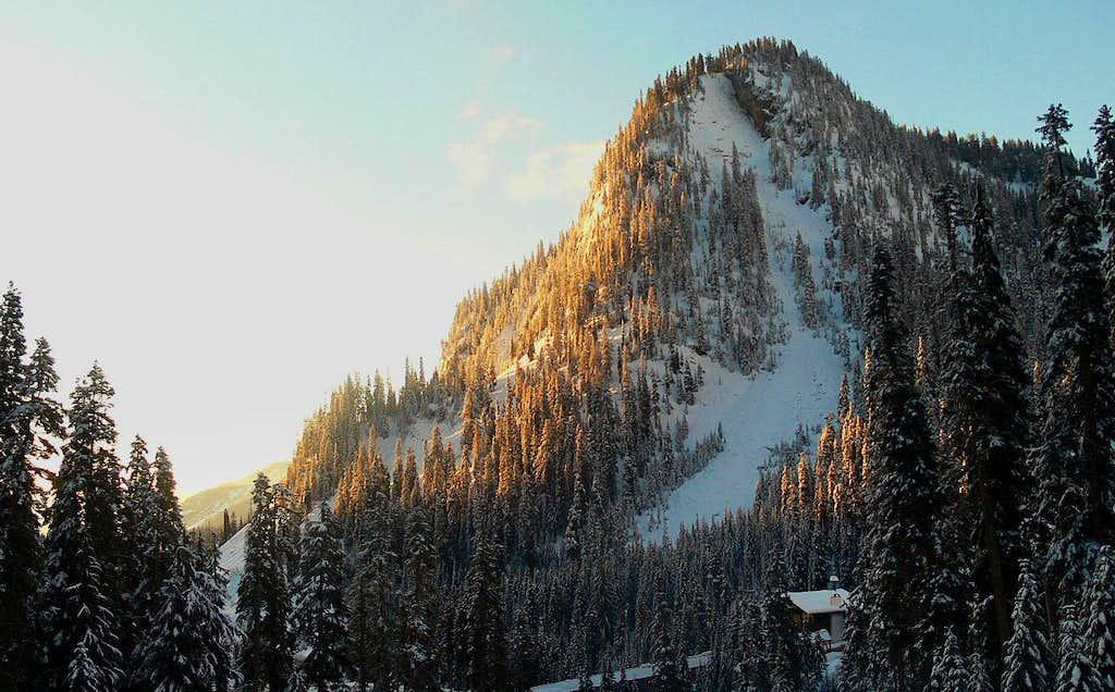 Sun Lit Trees on the Mountain