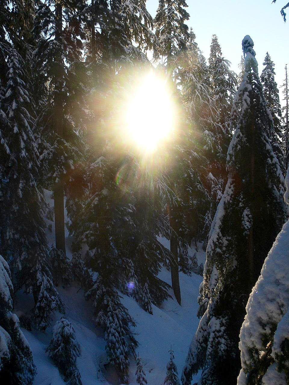 The Sun Shining though