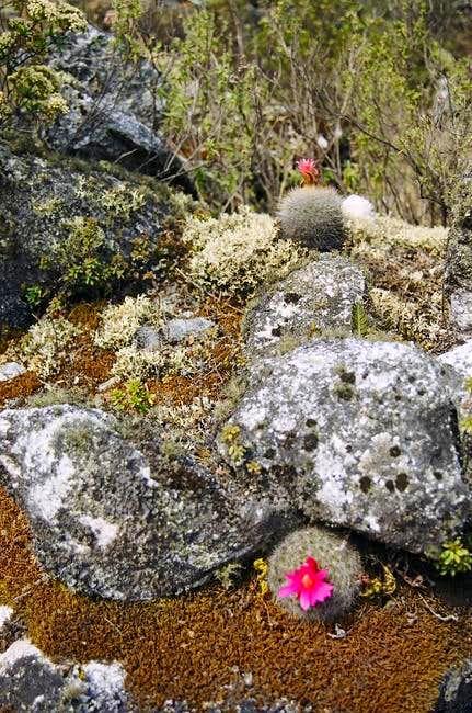 Flower in Quebrada de Santa...