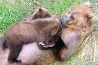 Cubs with Mother