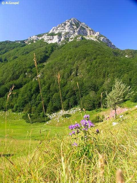 Malovan (1709m) from Bunovac...