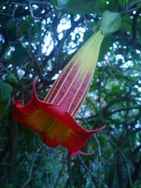 Pululahua's flowers.