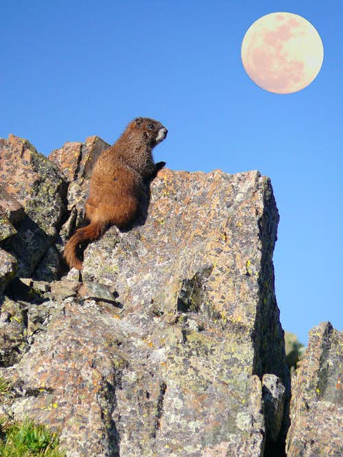Moon over my marmot..