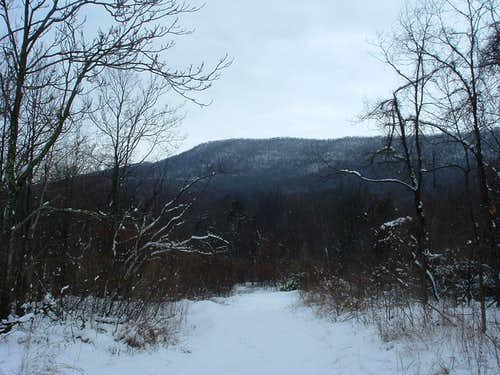Looking South from Peter Mill Run Trail