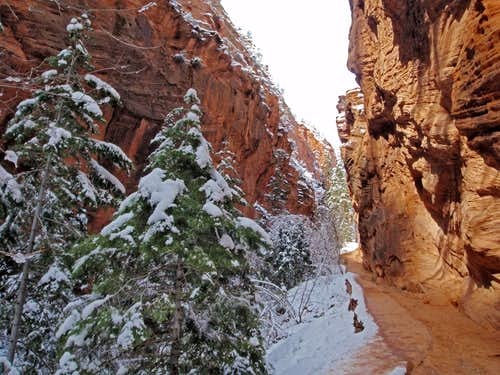 Winter In Zion