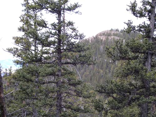 Approaching the summit through the trees