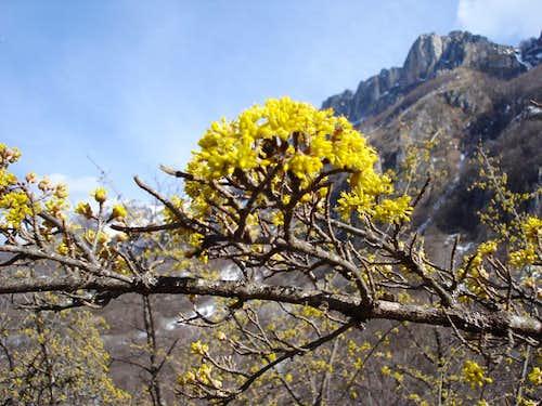 Stogovo: Spring flowers