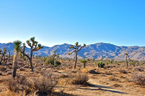 Typical Joshua Tree Landscape