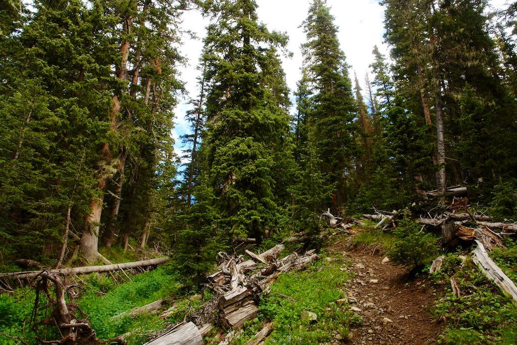 Bull Creek Trail