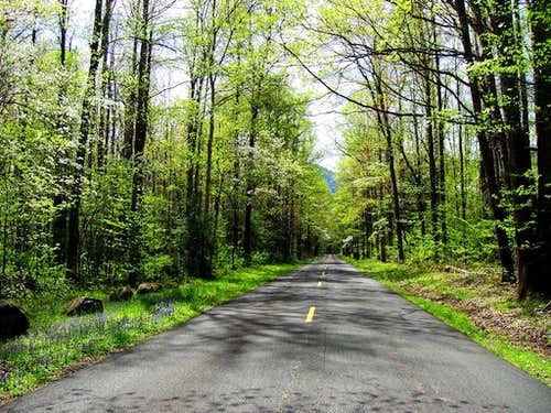 Road to Cosby Campground in April