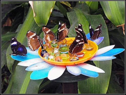 The bar for butterflies