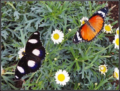 Butterflies of Bordano