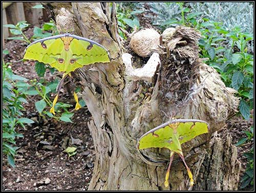 Bordano butterflies