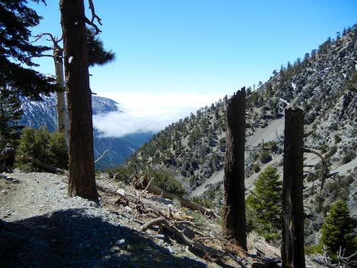 Mt. Baldy Area