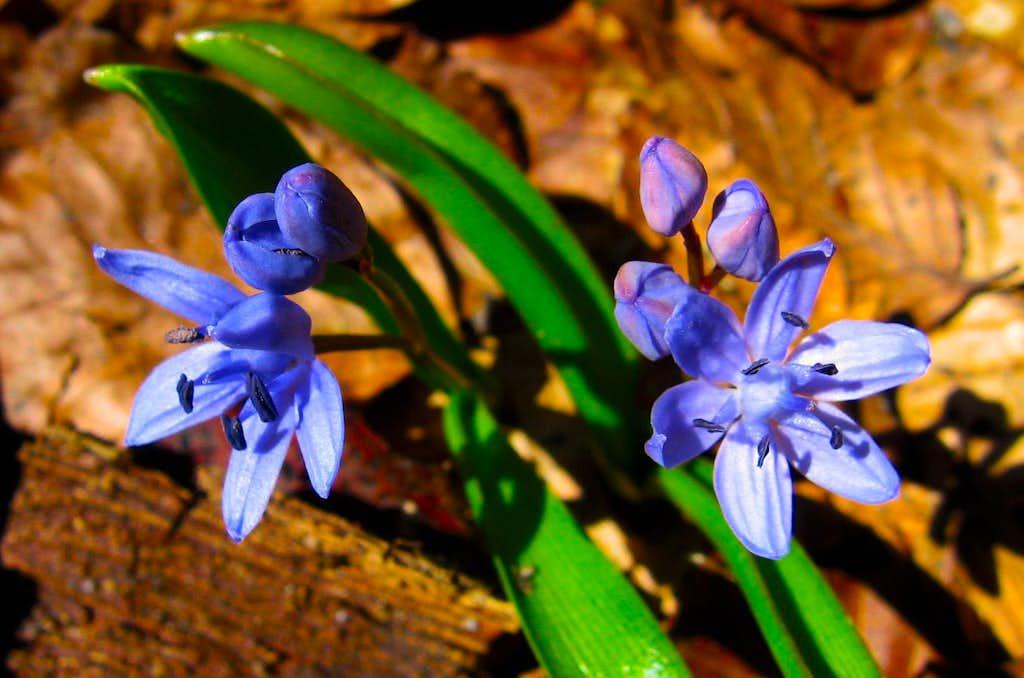 Spring in Bucegi 2