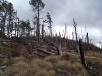 Fire remnants on Kellogg