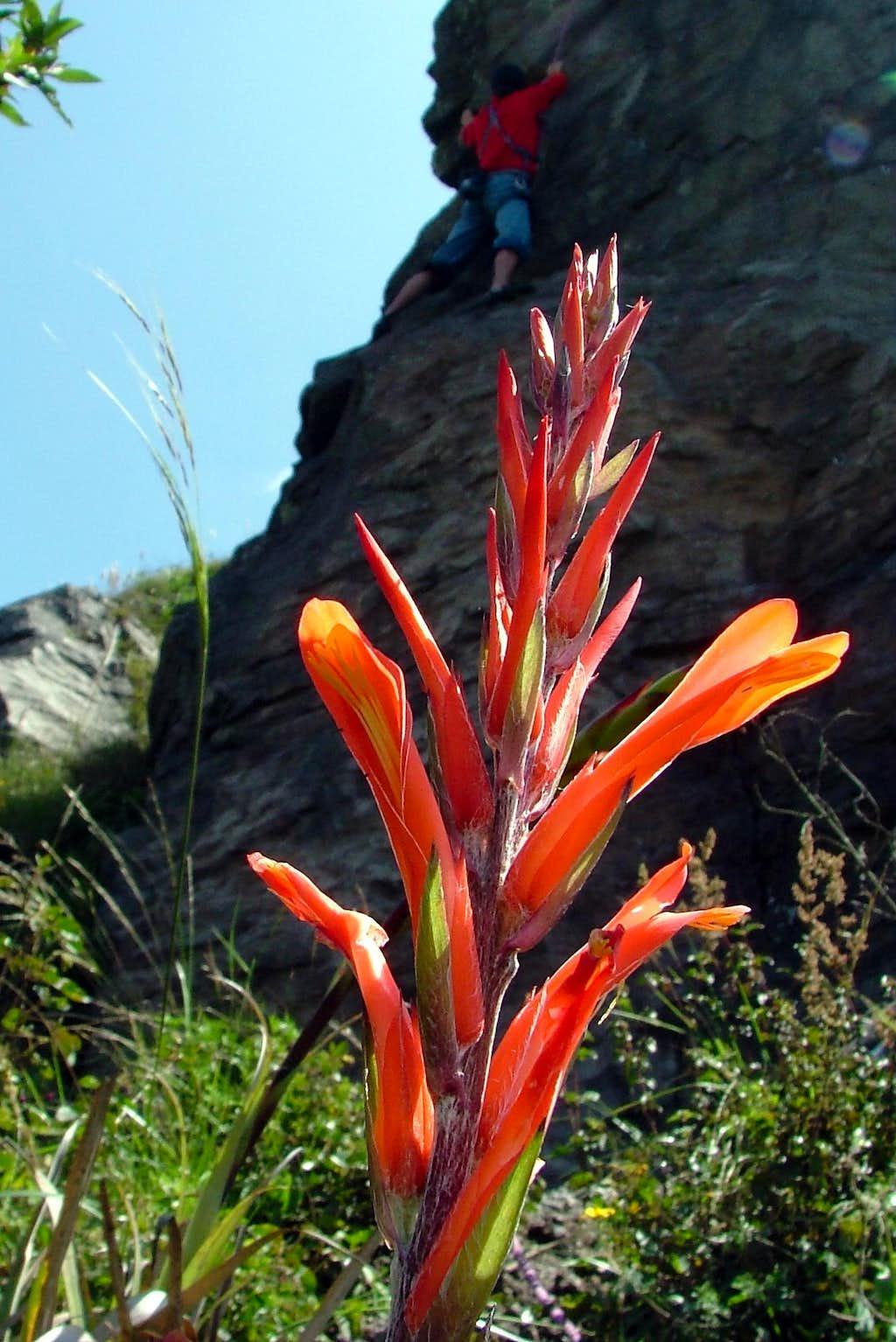 Las Canteras flora.