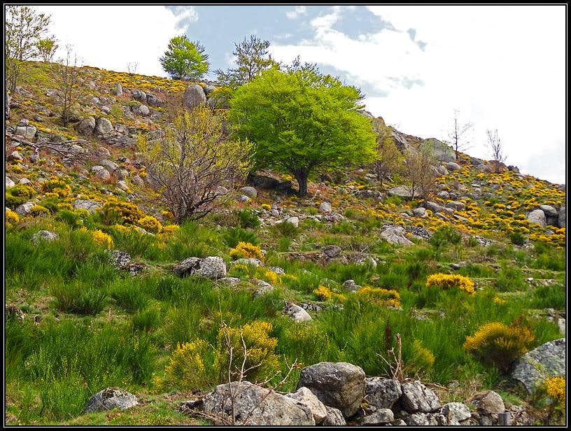 Spring below Mont Lozere
