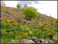 Spring below Mont Lozere