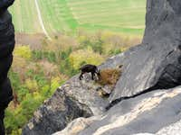 An adventurous goat on a rock cliff of the
