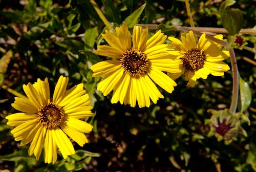 Wildflower Guide - Santa Monica Mountains