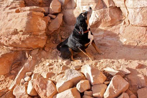 Duchess checking out the climb