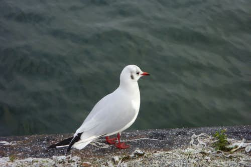 Seagull and the Baltic sea