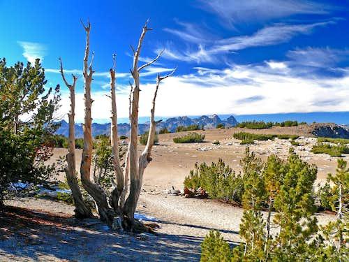 Sandy trail, Mammoth Crest