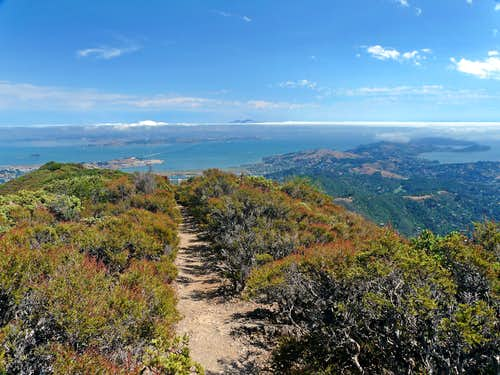 Mt. Tamalpais, Marin Co. Ca