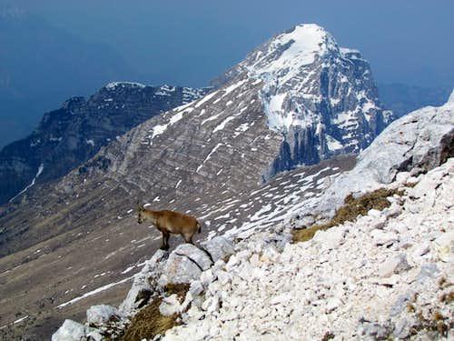 ibex and jof di montasio