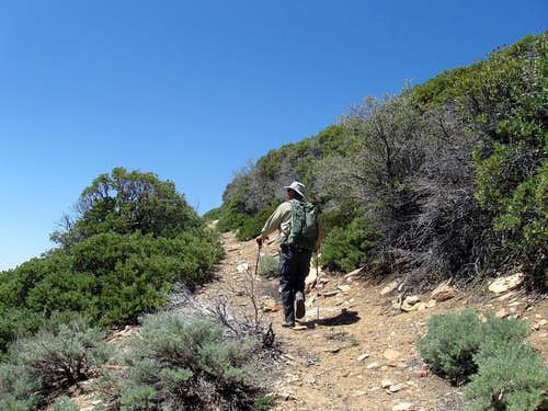 a most helpful trail    (15)