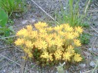 20100707 1636 yellow