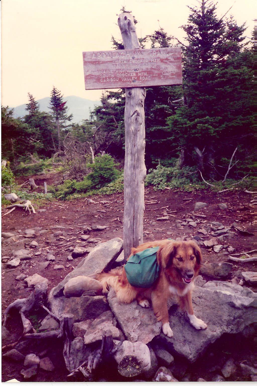 Rainier on North Crocker Summit