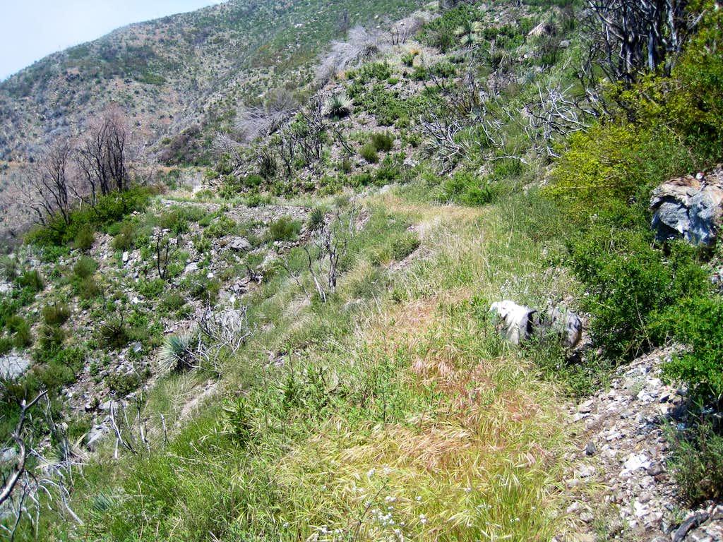 Strawberry Peak trail