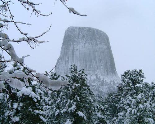 In the Winter, this Tower can...