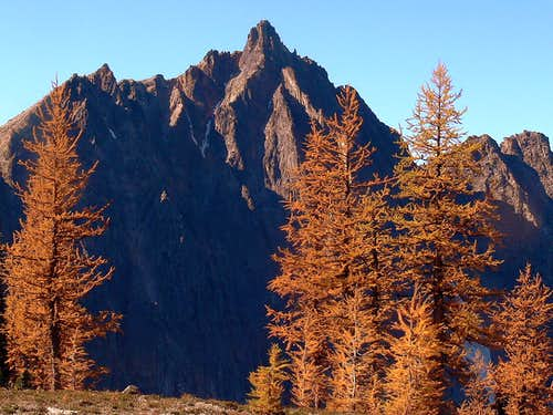 Mount Hardy with Golden Larches