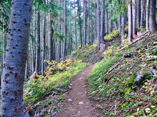 The PCT Trail