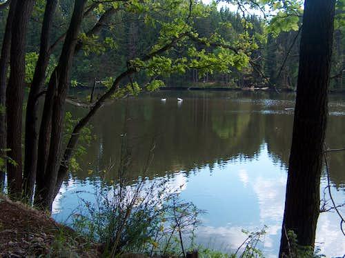 Swans near Barcinek