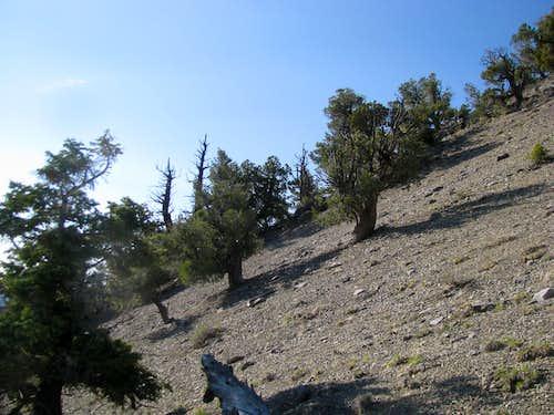 Terrain along lower slopes