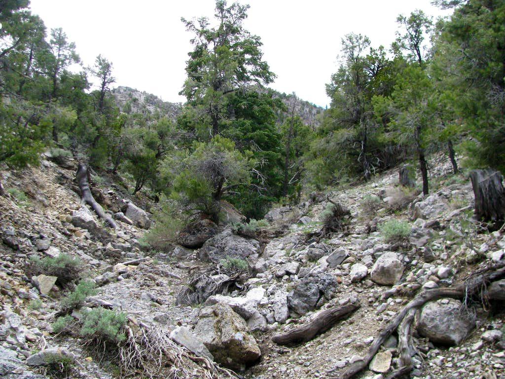 Lower wash/ravine