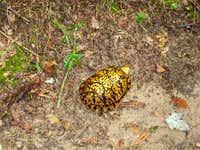 20100906 1533 turtle