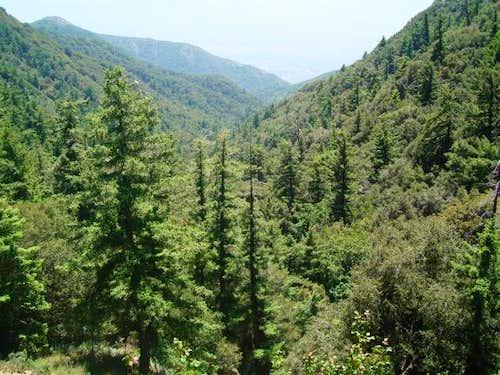 Upper Santa Anita Canyon