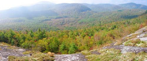 Nice panorama of the forest,...