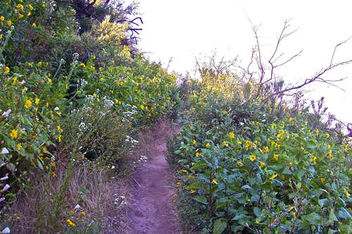 Wildflowers on both sides of the trail